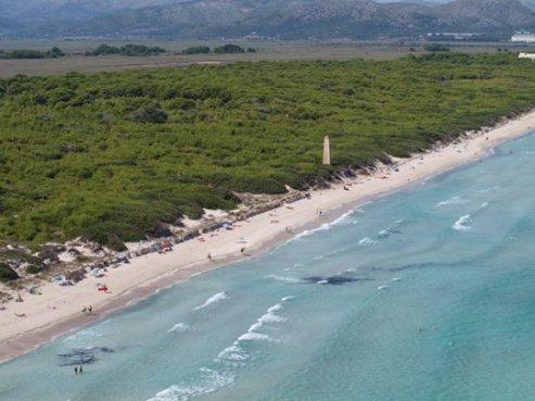 playa-de-Muro-Mallorca